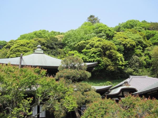 鎌倉の瑞泉寺 こんな静かな場所があったんだ