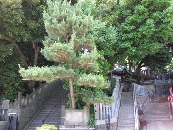 目黒不動尊の鷹居の松跡