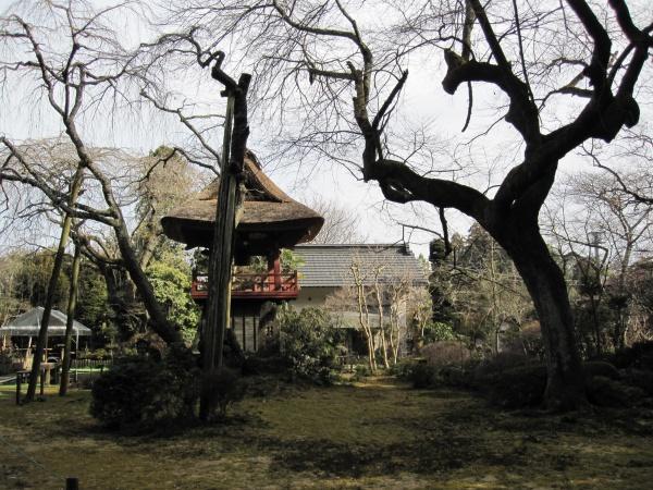 光丸山法輪寺の西行桜