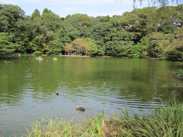 那須乃木神社公園池