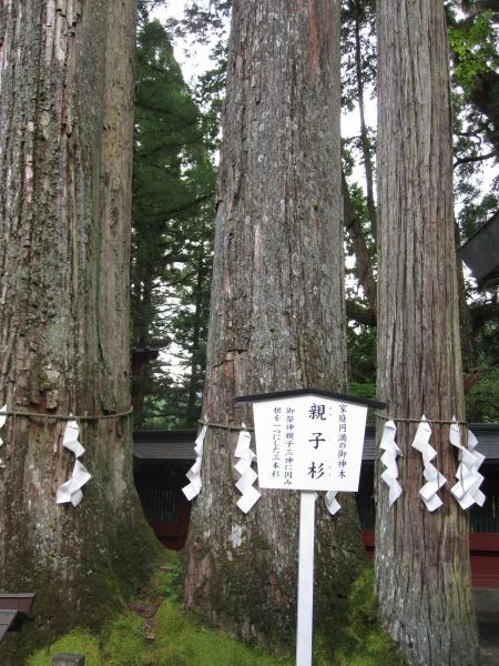 日光二荒山神社御神木親子杉