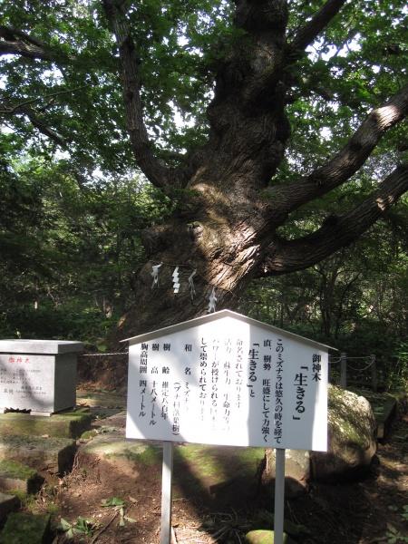 那須温泉神社御神木