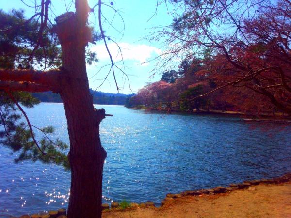 南湖 日本最初の公園といわれる公園 白河市 2014春