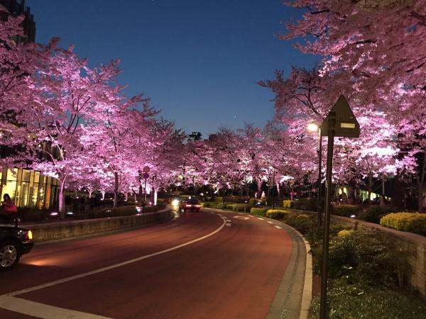 2015年 ミッドタウンガーデン夜桜