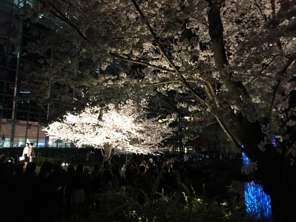 2015年毛利甲斐守邸跡夜桜