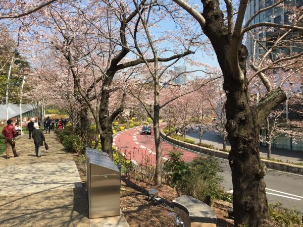 2017年 ミッドタウンガーデンの満開の桜