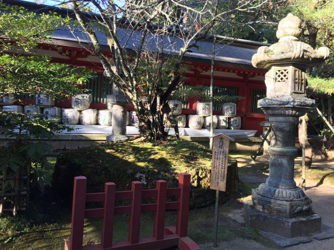 香取神宮の黄門桜