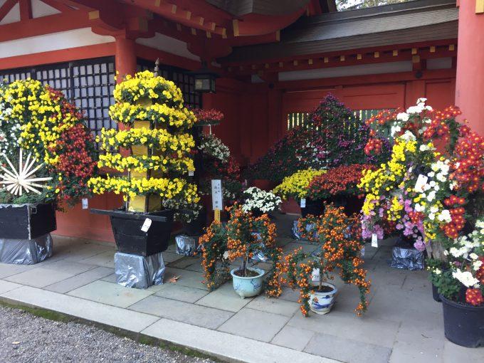 香取神宮の菊祭り