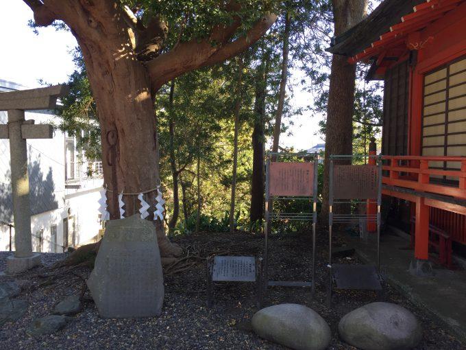 玉前神社の御神木