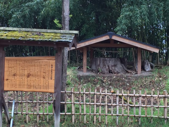 眞田神社の御神木