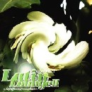 Abstract Latin Lounge 2の紹介と感想AbstractLatinLounge2 1