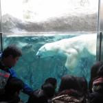 ほっきょくぐま館でもぐもぐタイム!旭山動物園 旭川市 北海道Hokkaidou 20121022 112237 150x150