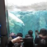 ほっきょくぐま館でもぐもぐタイム!旭山動物園 旭川市 北海道Hokkaidou 20121022 112342 150x150