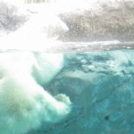 ほっきょくぐま館でもぐもぐタイム!旭山動物園 旭川市 北海道Hokkaidou 20121022 112808 150x150