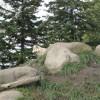 オオカミは姿を見せてくれた、オランウータンは寒がりだった 旭山動物園 旭川市 北海道Hokkaidou 20121022 115339 100x100