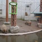 かぴばらさんたちをみて東門で昼食 旭山動物園 旭川市 北海道Hokkaidou 20121022 120624 150x150
