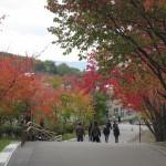 麒麟…いやキリンをみて東門shopに立ち寄って北限のサルをみる 旭山動物園 旭川市 北海道Hokkaidou 20121022 133512 150x150