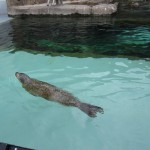 やはりここを見なきゃ、あざらし館と空飛ぶペンギンたち 旭山動物園 旭川市 北海道Hokkaidou 20121022 135332 150x150