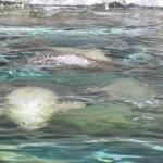 やはりここを見なきゃ、あざらし館と空飛ぶペンギンたち 旭山動物園 旭川市 北海道Hokkaidou 20121022 135346 150x150