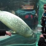 やはりここを見なきゃ、あざらし館と空飛ぶペンギンたち 旭山動物園 旭川市 北海道Hokkaidou 20121022 135815 150x150