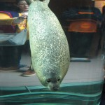 やはりここを見なきゃ、あざらし館と空飛ぶペンギンたち 旭山動物園 旭川市 北海道Hokkaidou 20121022 135836 150x150