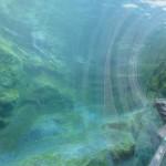 やはりここを見なきゃ、あざらし館と空飛ぶペンギンたち 旭山動物園 旭川市 北海道Hokkaidou 20121022 140244 150x150
