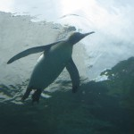 やはりここを見なきゃ、あざらし館と空飛ぶペンギンたち 旭山動物園 旭川市 北海道Hokkaidou 20121022 140335 150x150