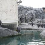 やはりここを見なきゃ、あざらし館と空飛ぶペンギンたち 旭山動物園 旭川市 北海道Hokkaidou 20121022 140739 150x150