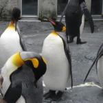 やはりここを見なきゃ、あざらし館と空飛ぶペンギンたち 旭山動物園 旭川市 北海道Hokkaidou 20121022 140927 150x150