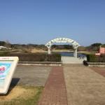 国営ひたち海浜公園 ネモフィラの季節の前にスイセンIbaraki 20160320 145934000 150x150