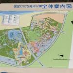 国営ひたち海浜公園 ネモフィラの季節の前にスイセンIbaraki 20160320 145950000 150x150