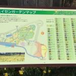 国営ひたち海浜公園 ネモフィラの季節の前にスイセンIbaraki 20160320 154415000 150x150