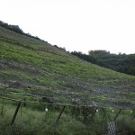 ココ・ファーム・ワイナリー 足利市のワイナリーのワインはリーズナブルで美味しいTochigi 20120917 155850 150x150