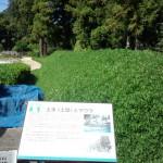 道の駅 那須野が原博物館Tochigi 20130601 084120 150x150