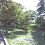 道の駅 那須野が原博物館Tochigi 20130601 084239 150x150