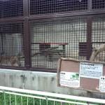 宇都宮動物園 ファミリー向けの手頃な大きさの動物園Tochigi 20131103 120702 150x150