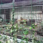 宇都宮動物園 ファミリー向けの手頃な大きさの動物園Tochigi 20131103 120738 150x150