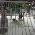 宇都宮動物園 ファミリー向けの手頃な大きさの動物園Tochigi 20131103 121357 150x150