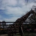 宇都宮動物園 ファミリー向けの手頃な大きさの動物園Tochigi 20131103 121955 150x150