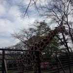 宇都宮動物園 ファミリー向けの手頃な大きさの動物園Tochigi 20131103 122016 150x150