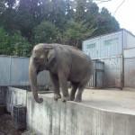 宇都宮動物園 ファミリー向けの手頃な大きさの動物園Tochigi 20131103 122207 150x150