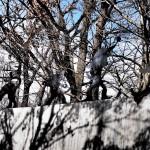 藤城清治美術館 那須高原に行ったら見に行ってみたらいい美術館Tochigi 20131124 122748000 150x150