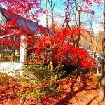 藤城清治美術館 那須高原に行ったら見に行ってみたらいい美術館Tochigi 20131124 123318000 150x150