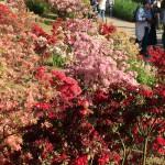 世界を魅了した夢の旅行先「あしかがフラワーパーク」の藤の花が満開!!! CNN「2014年の世界の夢の旅行先9カ所」Tochigi 20150505 154740 150x150