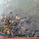 那須りんどう湖 LAKE VIEW(旧りんどう湖ファミリー牧場) 2015年の初秋Tochigi 20151004 115125024 150x150