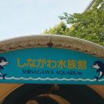 しながわ水族館 涼を求めて行ってみたものの、皆同じこと考えるもので…Tokyo 20140815 102502000 150x150
