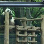 上野動物園のハシビロコウがキャラが立っていた(写真撮り忘れ・・・)Tokyo 20160502 09425533180 150x150