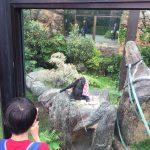 上野動物園のハシビロコウがキャラが立っていた(写真撮り忘れ・・・)Tokyo 20160502 10110533180 150x150