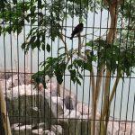 上野動物園のハシビロコウがキャラが立っていた(写真撮り忘れ・・・)Tokyo 20160502 10231133180 150x150