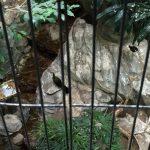 上野動物園のハシビロコウがキャラが立っていた(写真撮り忘れ・・・)Tokyo 20160502 10242533180 150x150